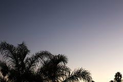 De zonsondergang van de silhouetpalm met gele, rode en violette hemel en palm Royalty-vrije Stock Foto's