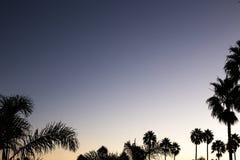 De zonsondergang van de silhouetpalm met rode en donkere violette hemel en palm Stock Afbeeldingen