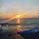 De zonsondergang van Sotchi in Adler-meeuw in de zon stock afbeelding