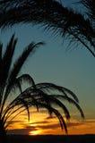 De zonsondergang van Tunesië stock foto's
