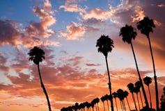 De Zonsondergang van vier Palm Stock Afbeeldingen
