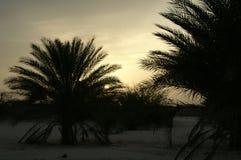 De zonsondergang in woestijn Stock Foto