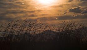 De zonsondergang is zeer verschillend Stock Foto