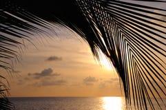 De zonsondergangachtergrond van het strand stock foto's