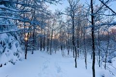 De zonsondergangbomen van de de wintersneeuw royalty-vrije stock afbeeldingen