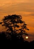 De zonsondergangboom van Amsterdam Royalty-vrije Stock Foto's