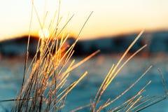 De zonsonderganglandschap van de winter Macrofoto van ijzig gras stock foto's