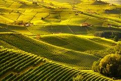 De zonsondergangpanorama van Langhewijngaarden, Barolo, Piemonte, Italië Europa royalty-vrije stock afbeeldingen