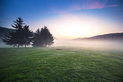 De zonsopgang bij de berg, mist behandelde bomen in de vallei met heldere blauwe hemel Royalty-vrije Stock Foto's