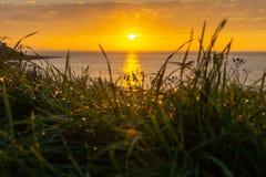 De zonsopgang door het gras met dauw/Ochtend trok en een mooie zonsopgang op overzees/Zeegezicht door de dauw van het gras/ stock foto's