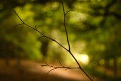 De zonsopgang van de herfst in het bos Stock Afbeelding