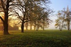 De zonsopgang van de lente stock foto's