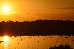 De zonsopgang van de vroege vogel Stock Afbeeldingen