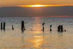 De zonsopgang van de waterkant Stock Foto's