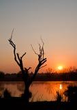 De Zonsopgang van de winter met een boomsilhouet Stock Foto's