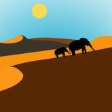 De Zonsopgang van de Woestijn van olifanten Stock Afbeeldingen