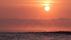De Zonsopgang van het strand stock video