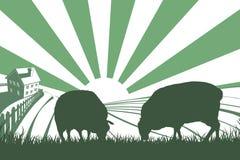 De Zonsopganglandschap van het schapenlandbouwbedrijf Royalty-vrije Stock Afbeelding