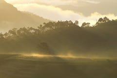 De zonstralen door boom maken mooie zonnestraal stock fotografie