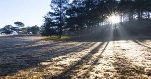 De zonstralen door boom maken mooie zonnestraal stock afbeeldingen