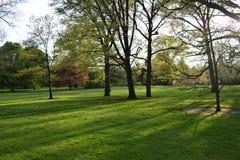 De zonstralen glanzen door de bomen stock afbeelding