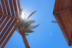 De zonstralen maken manier door takken van palm Ontspannend concept royalty-vrije stock foto