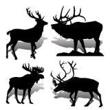 De zoogdierenherten en Amerikaanse elanden van inzamelings Bosdieren, op witte bac Royalty-vrije Stock Fotografie