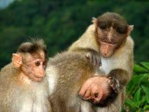 De Zorg van de aap Stock Foto