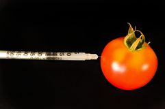 De zorg van de tomaat stock foto