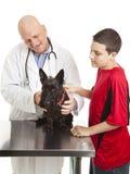 De Zorgen van de dierenarts voor Hond Scotty Stock Foto