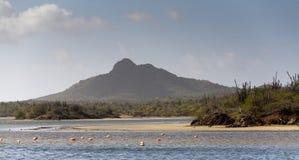 De zoute vijver van Bonaire stock fotografie