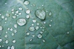 De zuivere dalingen van de waterregen op groen blad met venation zen achtergrondmacro Stock Foto's