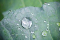 De zuivere dalingen van de waterregen op groen blad met venation zen achtergrondmacro Royalty-vrije Stock Afbeelding