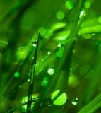 De zuivere Gevoelige Groene Samenvatting van de Grasochtend Royalty-vrije Stock Foto