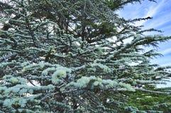 De zuiverheid van de bomen stock foto's