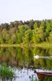 De zwaan drijft op het water royalty-vrije stock afbeeldingen