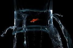 de zwaardvissen snijden plastic zak royalty-vrije stock foto