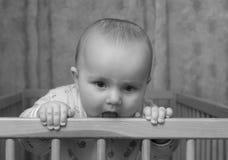 De zwangerschap van de zomer. Stock Fotografie