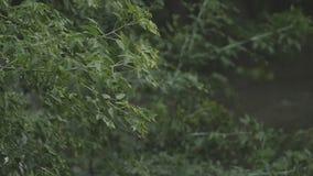 De zware regen giet neer op de bladeren en de takken van bomen in langzame motie stock videobeelden
