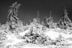 De zware winter Stock Foto's