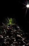De zwart achtergrond van de Boom van de Bonsai van de baby en sterlicht Royalty-vrije Stock Afbeeldingen