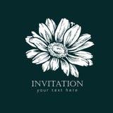 De zwart-witte bloem van de de stijlschets van de inktlijn Hand geschilderd madeliefje stock illustratie