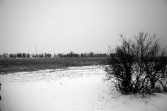 De zwart-witte Delta van Donau Stock Foto