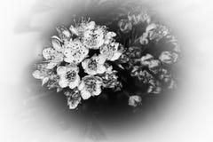 De zwart-witte foto van de bloem macro fijne kunst royalty-vrije stock afbeelding