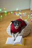 De zwart-witte hond bespectacled en in een rendier zette het kostuum poten op het open boek Stock Foto's