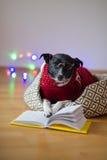De zwart-witte hond bespectacled en in een rendier zette het kostuum poten op het open boek Stock Fotografie