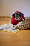 De zwart-witte hond bespectacled en in een rendier zette het kostuum poten op het open boek Stock Afbeelding