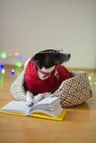 De zwart-witte hond bespectacled en in een rendier zette het kostuum poten op het open boek Royalty-vrije Stock Fotografie