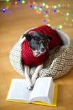 De zwart-witte hond bespectacled en in een rendier zette het kostuum poten op het open boek Royalty-vrije Stock Afbeeldingen
