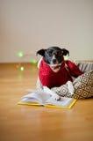 De zwart-witte hond bespectacled en in een rendier zette het kostuum poten op het open boek Royalty-vrije Stock Afbeelding